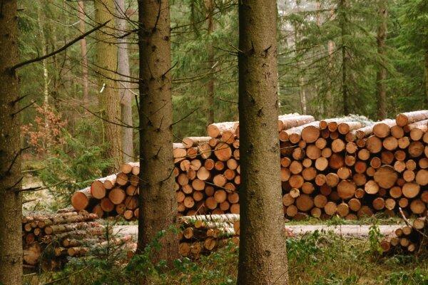 Holzvermarktung Holzverkauf Und Holzvertrieb Stmelf